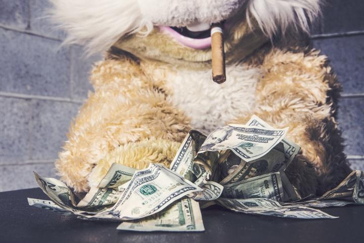 gratisography-cash-bunny